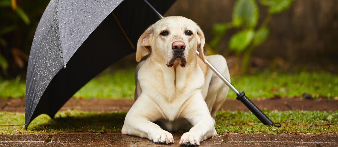 best-dog-umbrella