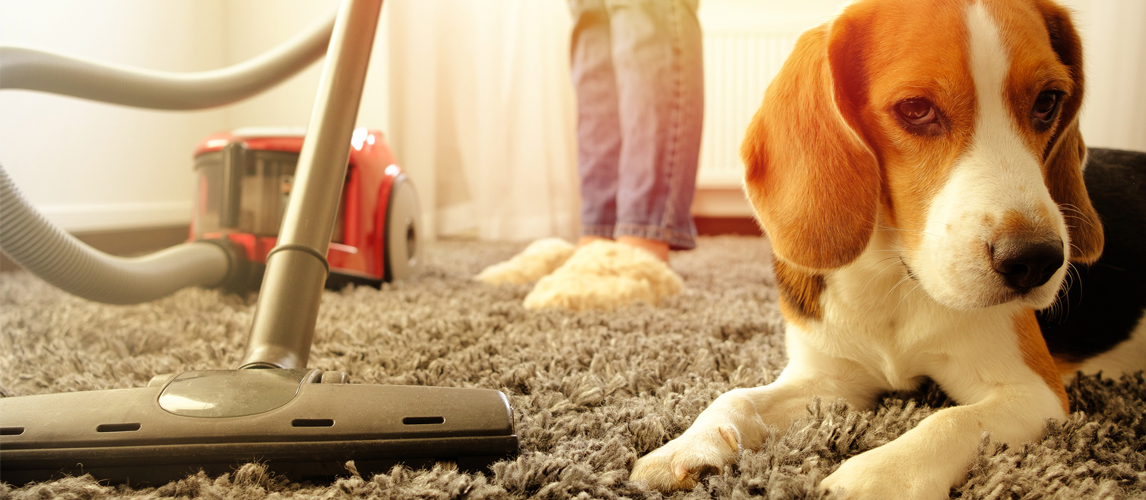best-dog-vacuum