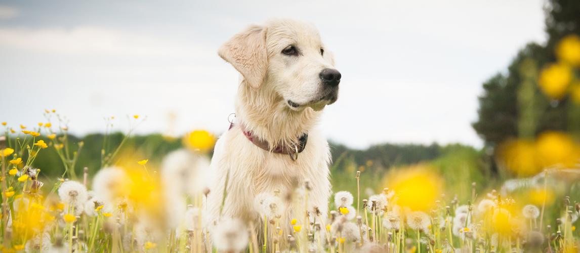 best-dog-wipes