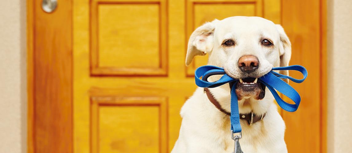 best-electronic-dog-door