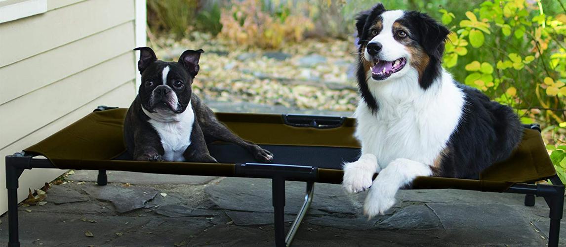 best-raised-dog-beds