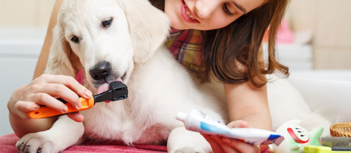 best-toothpaste-for-dogs