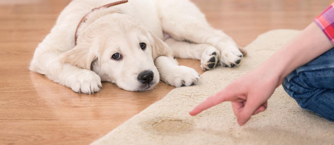 carpet-cleaner-for-dog-urine