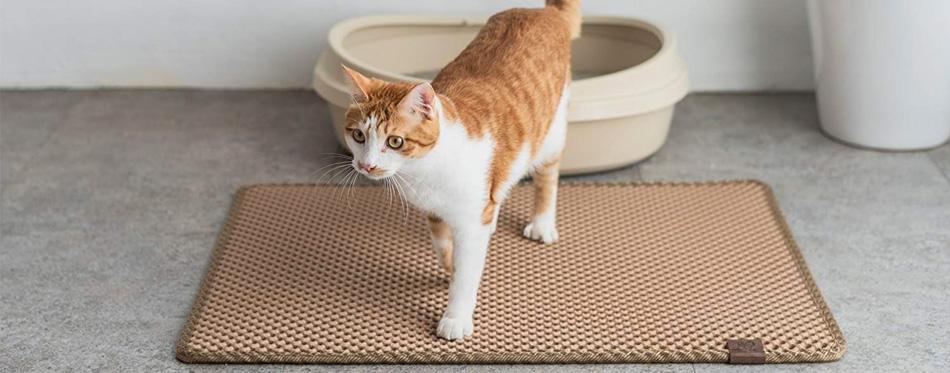 cat on litter mat
