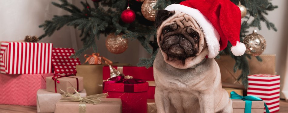 christmas clothes for pets