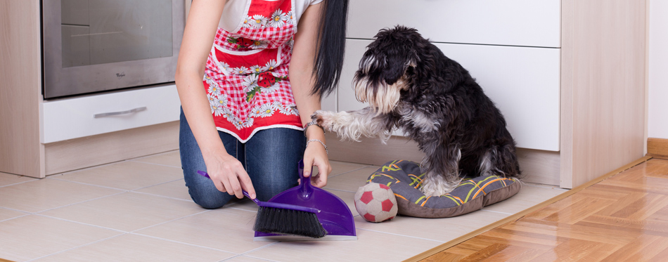 cleaning dog hair