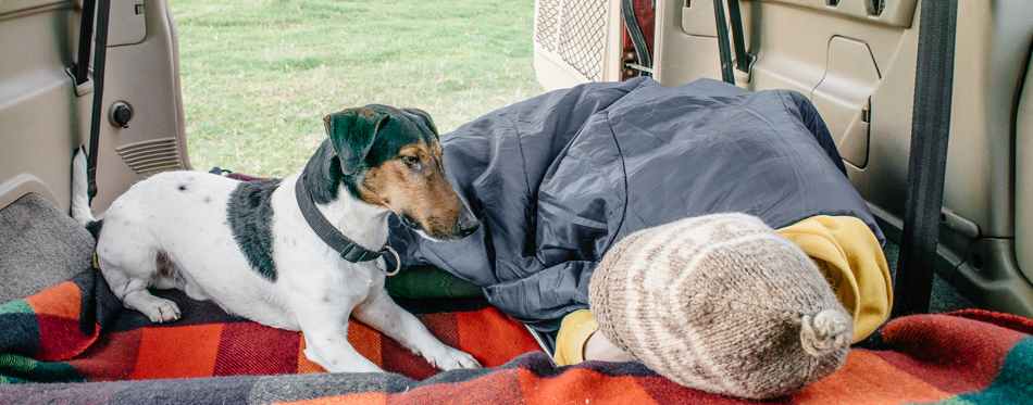 dog camping with a girl