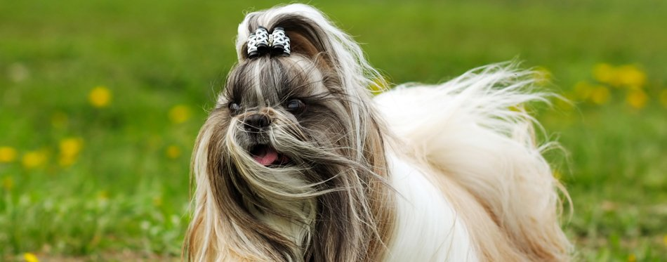 dog hair accessories