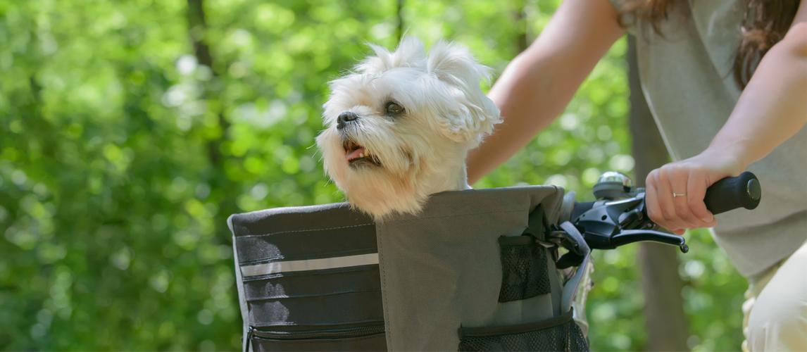 dog-in-a-bike-basket