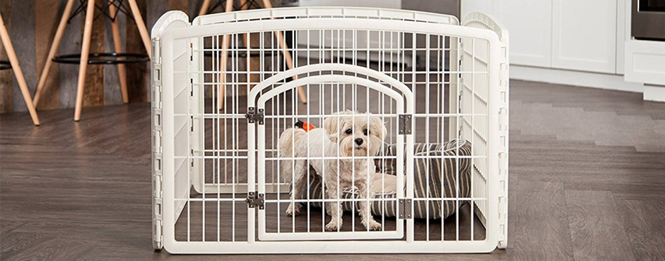 dog in a playpen