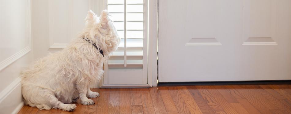 dog standing at the door