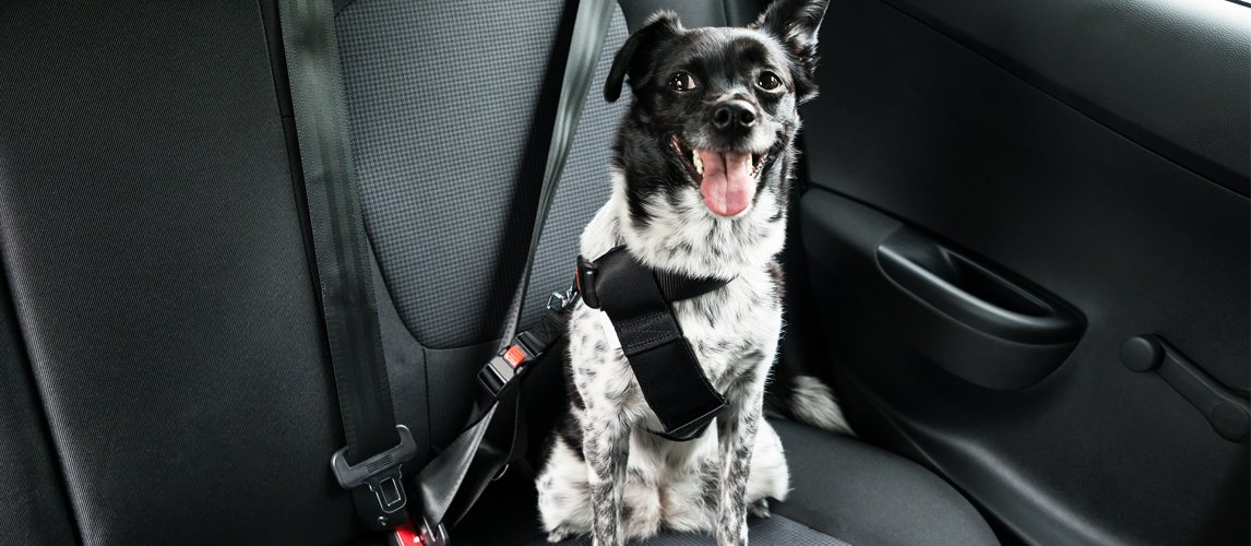Best Dog Seat Belt >> The Best Dog Seat Belts To Keep Your Canine Safe In 2019