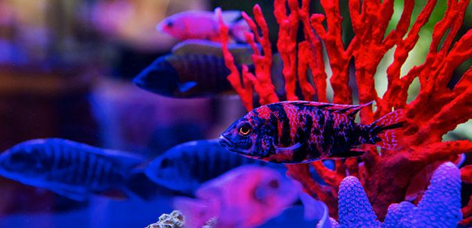 fish in saltwater aquarium