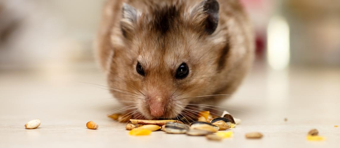 gerbil-eating