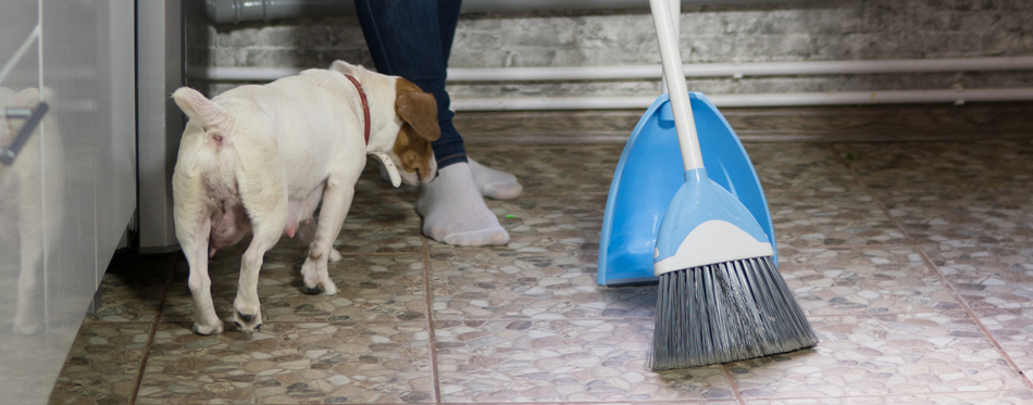 sweeping dog hair
