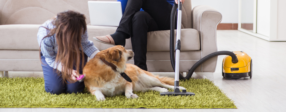vacuum cleaner for pet hair