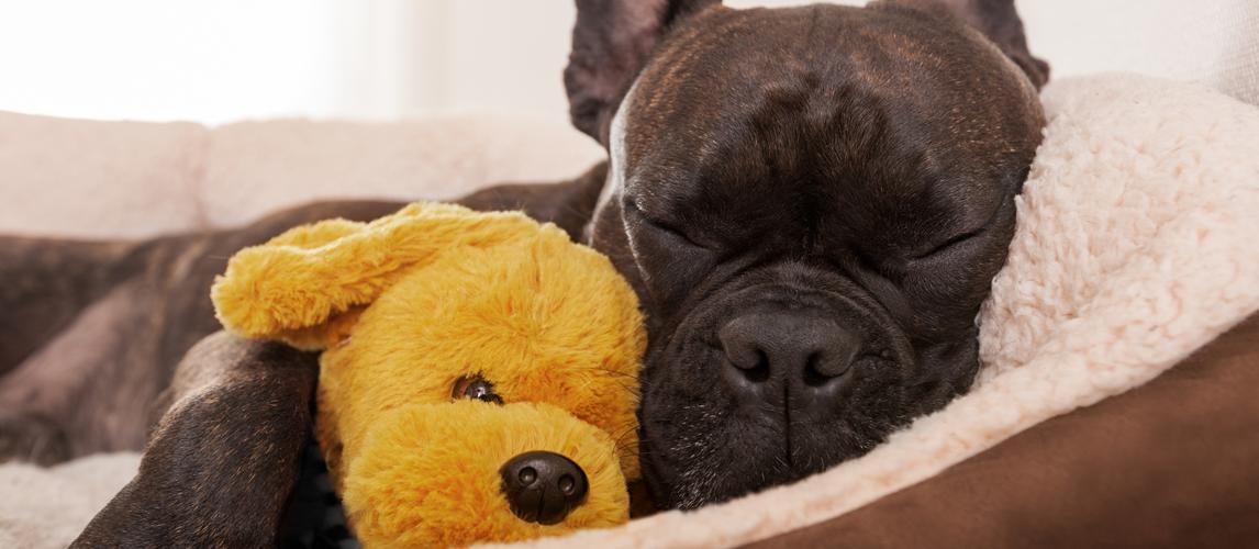 washable-dog-bed