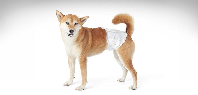 AmazonBasics-Male-Dog-Wrap-featured