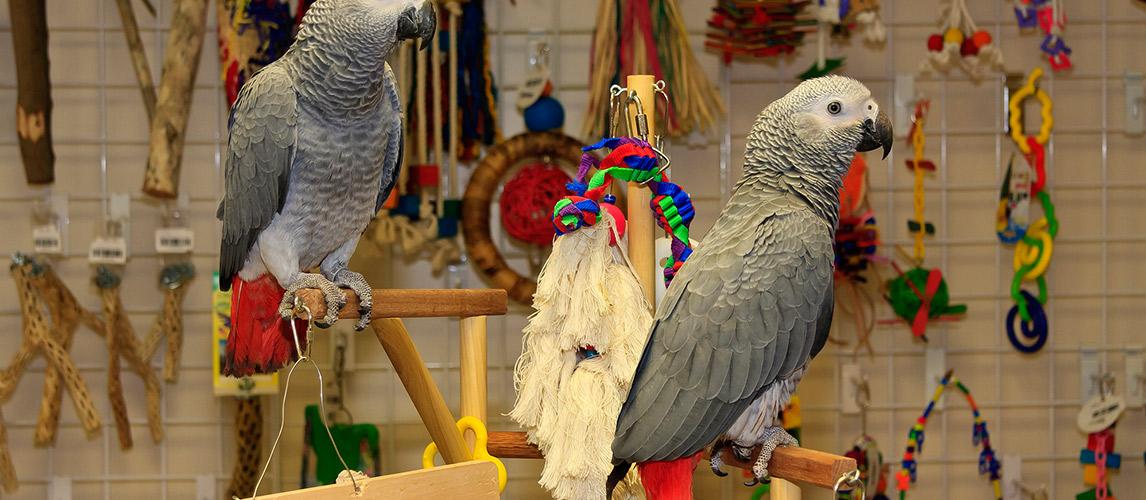 Best-Bird-Toy