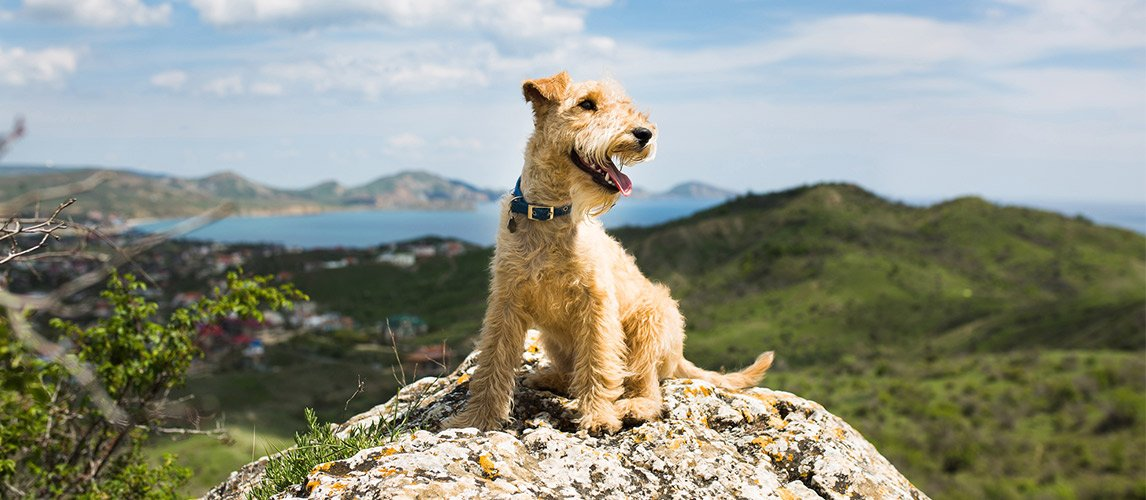 Best-Calcium-Supplements-for-Dogs