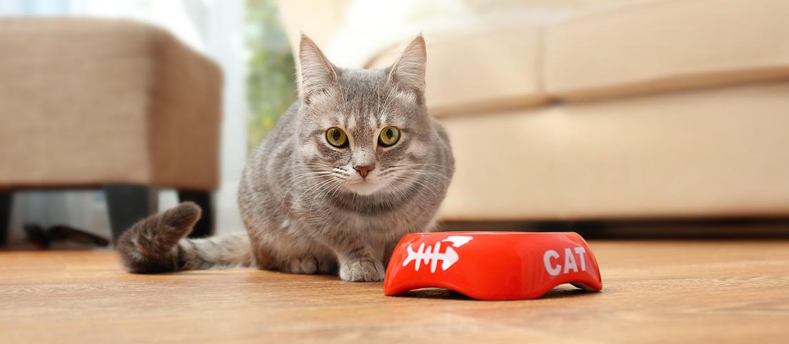 Best-Cat-Food-for-Sensitive-Stomachs