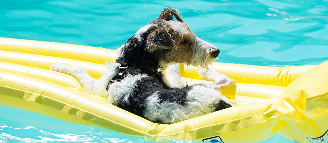 Best-Dog-Floats-For-Pool
