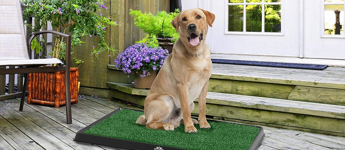 Best option for indoor dog potty