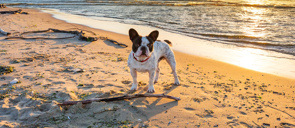 Best-Sunscreens-for-Dogs