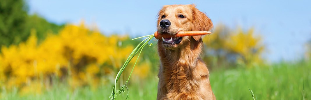 Can Dogs Eat Carrots