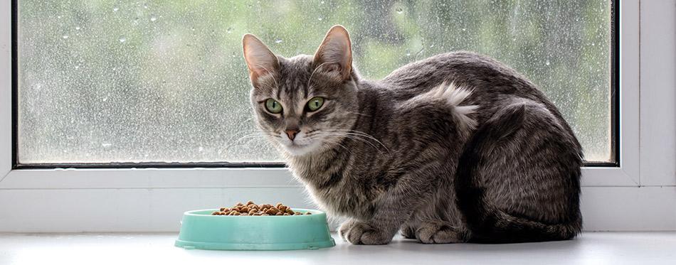 Cat sitting near the bowl