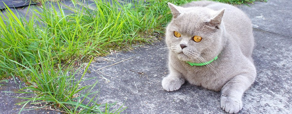 The Best Flea Collar for Cats (Review) in 2019 | My Pet