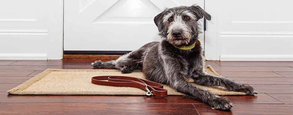 Dog laying at the doormat