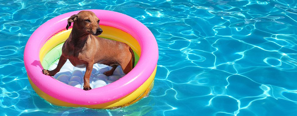 Dog on airbed in pool