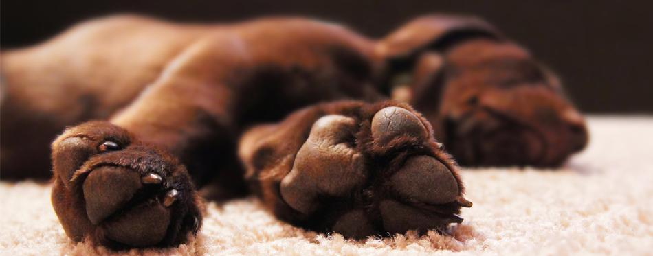 balm for dog paws