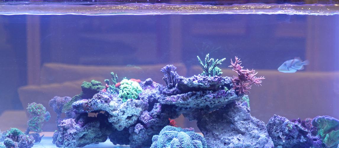 best-aquarium-hood