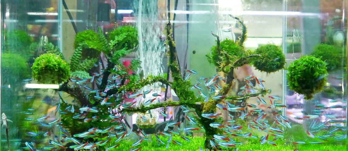 best-aquarium-test-kits