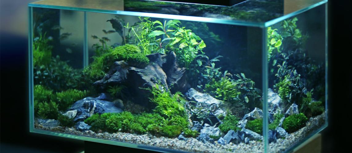 best-aquarium