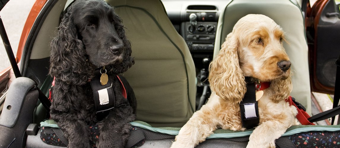 best-dog-car-seat-cover