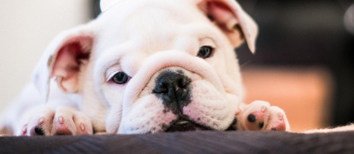 best-dog-crate-mat