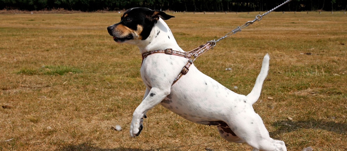 best-dog-harness