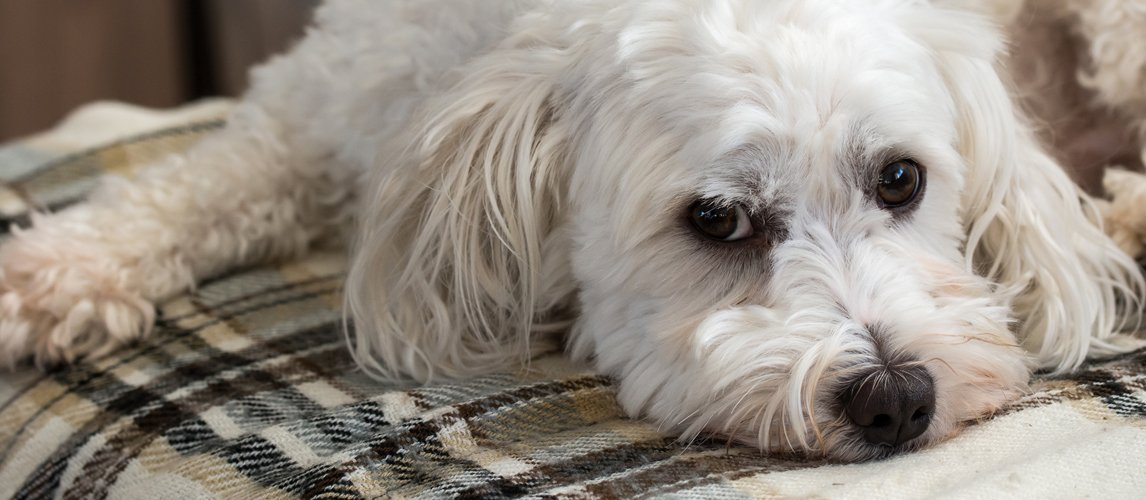 best-dog-orthopedic-bed