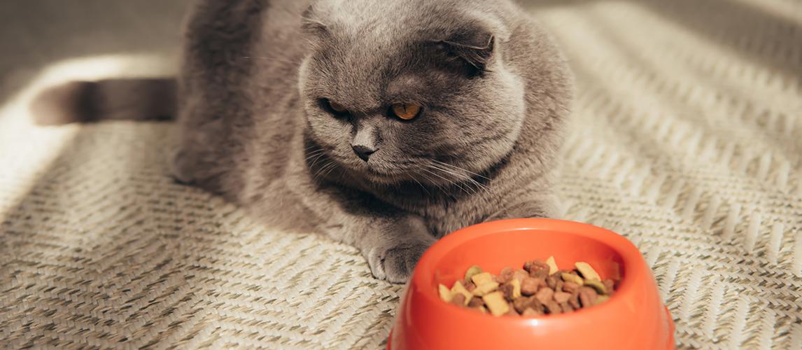 best-high-fiber-cat-food