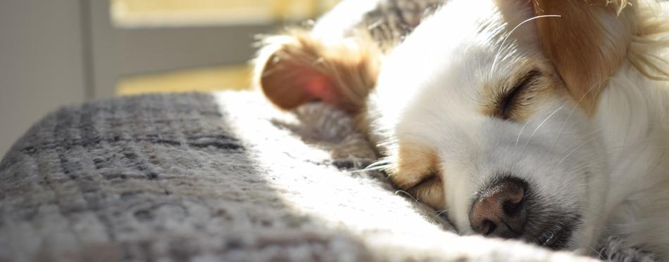 dog sleeping on a mat