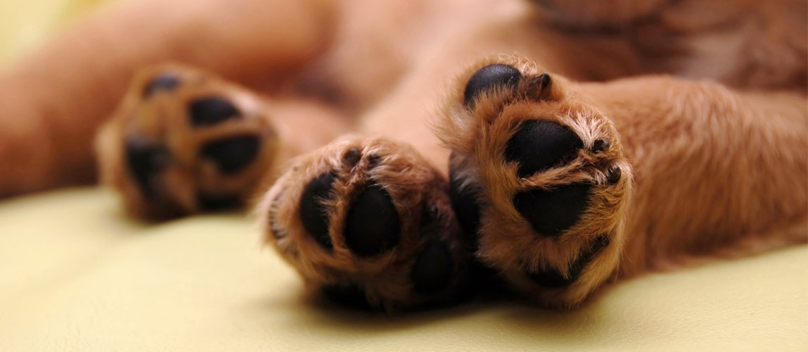 paw-protection-wax-for-dogs