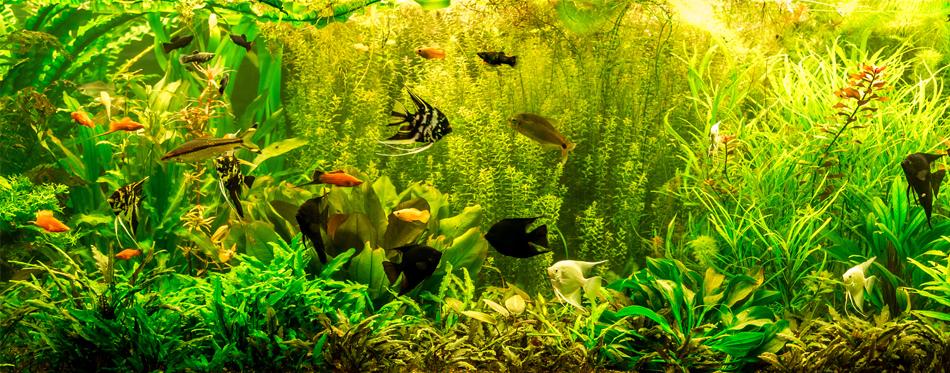 water test for aquarium