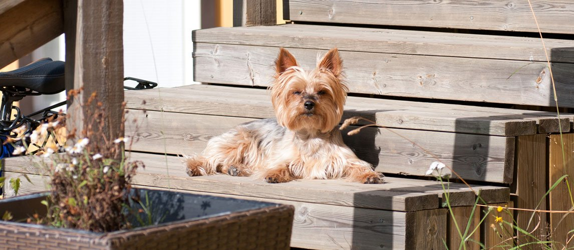 5-Top-Dog-Foods-To-Feed-Your-Yorkie