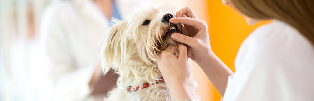 5-common-myths-about-your-pet's-dental-health