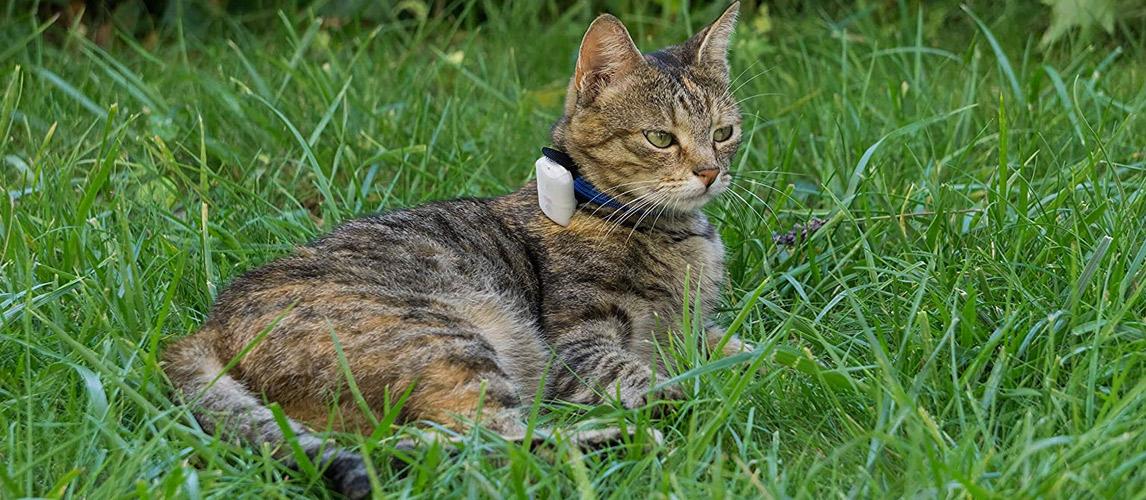 Best-Cat-GPS-Tracker