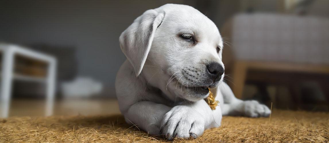 Best-Dental-Chews-for-Dogs
