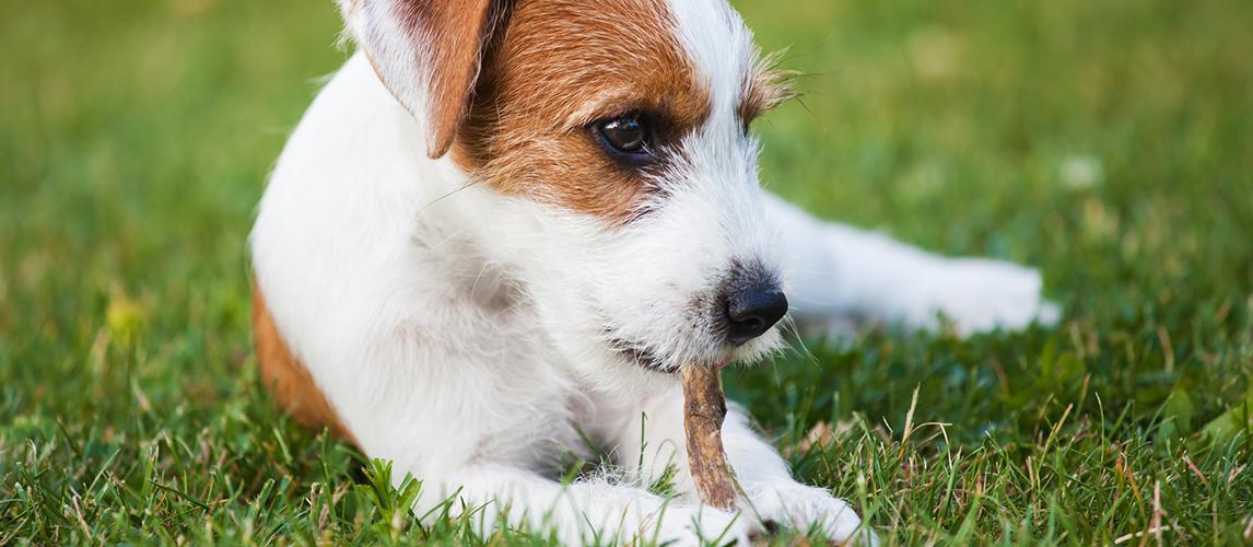 Best-Dog-Chews